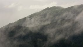 Mist over rain forest tree top mountain stock footage