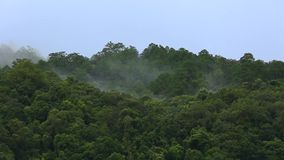 Mist over rain forest tree top mountain stock video