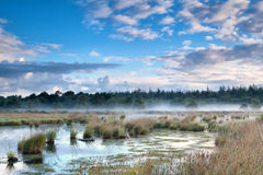 Mist over swamp in the morning Royalty Free Stock Images