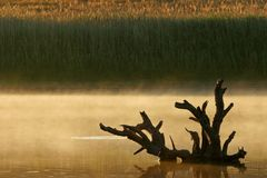 Mist over water Royalty Free Stock Images