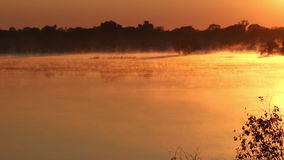 Mist over water. Early morning at sunrise, Zambezi river, southern Africa stock video