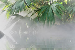 Mist over the water Royalty Free Stock Photo