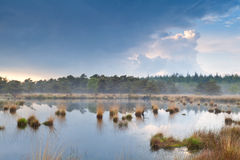 Mist over wild lake after rain Royalty Free Stock Image