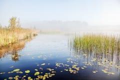 Mist på en sjö på gryning Arkivbild