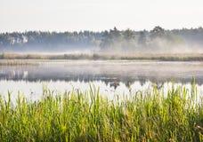 Mist på en sjö på gryning Royaltyfria Foton
