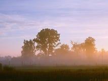Mist på gryning i byn Royaltyfri Bild