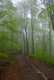 Mist på nationalparken Biogradska Gora, Montenegro royaltyfri fotografi