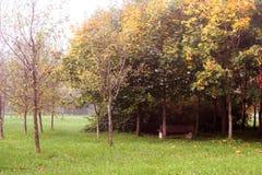 Mist in park Stock Afbeeldingen