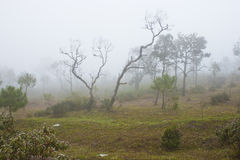 The mist on phuruea,Thailand. Royalty Free Stock Photography