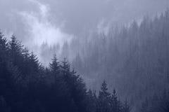Mist through pine tree tops. Mist rising up through pine trees royalty free stock image