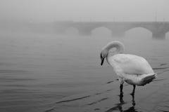 Mist in Prague Royalty Free Stock Image