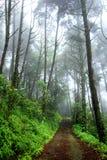 Mist in Rainforest at Doi Suthep Mountain on rainy season, Thail Royalty Free Stock Photo