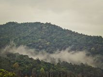 Mist in rainforest. Early morning mist in the tropical rainforest of Kota Tinggi in Peninsular Malaysia Stock Photography