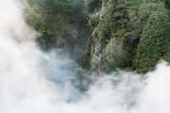 Mist raising in rainforest Royalty Free Stock Photo