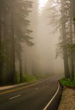 Mist in the Redwood Forest Stock Photos