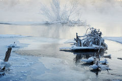 The mist rime and tree roots in river Royalty Free Stock Image
