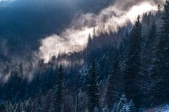 Mist rises above the forest royalty free stock images