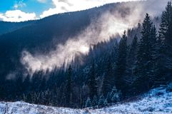 Mist rises above the forest royalty free stock photo