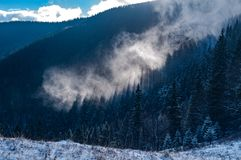 Mist rises above the forest stock images