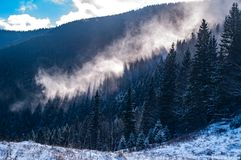 Mist rises above the forest stock photography