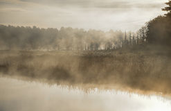 Mist rises from a marsh on an Ontario lake.   Contrail in pale summer sky.  Sunrise over narrow passage of a lake. A row of swamped, dying spruce trees is Royalty Free Stock Images
