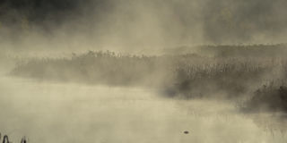 Mist rises from a marsh on an Ontario lake.   Heavy thick fog in dim lit swamp. Royalty Free Stock Images