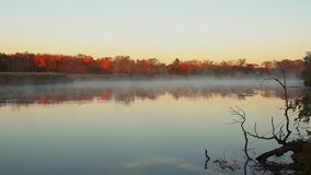 Mist rises over the river. On the banks of the autumn forest. stock footage