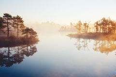 Mist rising from marsh Stock Image