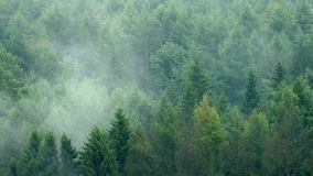 Mist Rising From Wilderness Forest. Mist slowly rising from dense forest stock video footage