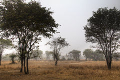 Mist on the savanna in Gorongosa National Park Royalty Free Stock Photos