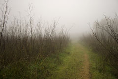 Mist-shrouded country road Stock Photos