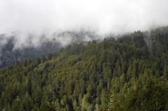 Mist shrouded forest Stock Photography