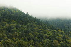 Mist On A Slope. Mist on a green mountain slope with a solid forest Royalty Free Stock Photos