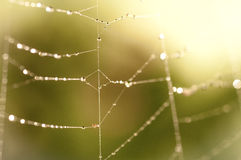 Mist On A Spider Web Stock Image