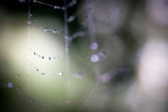 Mist On A Spider Web Royalty Free Stock Image