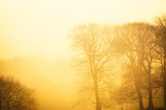 Atmospheric morning. Royalty Free Stock Photos