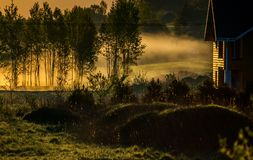 Mist at sunrise in rural countryside Stock Photos