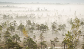 Mist in swamp Kemeri. Latvia Royalty Free Stock Image