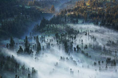 Mist sweeps through forest. Thick mist sweeps through forest shortly after sunrise. Java, Indonesia Royalty Free Stock Photos