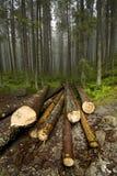 Mist in Tatras stock fotografie