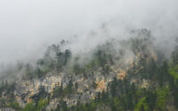 Mist on the top of mountain, National Park Biogradska Gora, Montenegro Royalty Free Stock Photography
