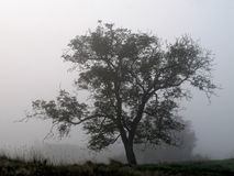 Mist and tree silhouet Stock Images