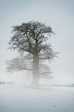 Mist Tree - Winter Royalty Free Stock Images