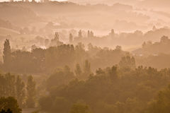 Mist trees as dawn Royalty Free Stock Images