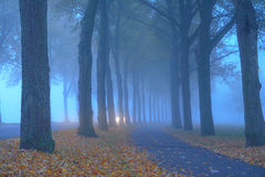 Mist in-between the trees. A misty morning, abycicle path and abroad, in the distance a car is approaching Stock Photo
