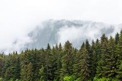 Mist utöver alaskabo evergreen arkivbild