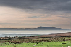 Mist in the valley. Early morning mist in the Yorkshire Dales National Park Stock Image