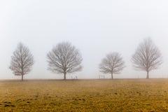 Mist Vier het Groene Landschap van Bomen Stock Afbeeldingen