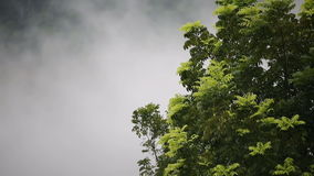 Mist weather with tree on mountain stock footage