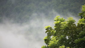 Mist weather with tree on mountain. Highway stock footage